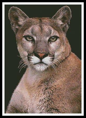 click here to view larger image of Cougar (chart)