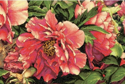 click here to view larger image of Coral Peonies (counted cross stitch kit)
