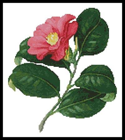 click here to view larger image of Japanese Camellia (chart)