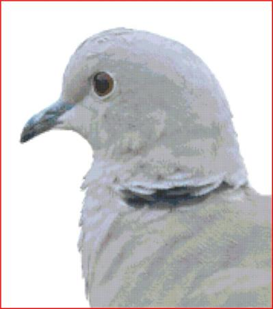 click here to view larger image of Collared Dove (chart)