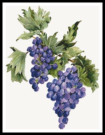 click here to view larger image of Concord Grapes (chart)