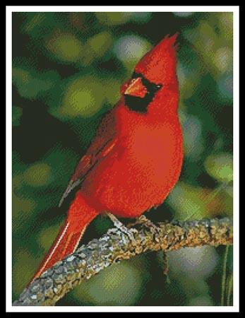 click here to view larger image of Cardinal Photo (chart)