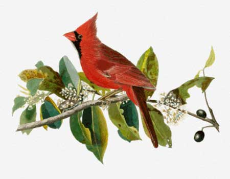 click here to view larger image of Cardinal Grosbeak (Male) (chart)