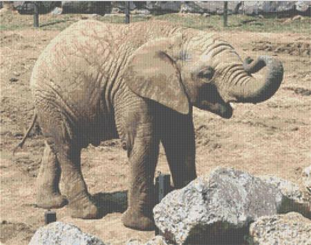 click here to view larger image of Juvenile Elephant (chart)