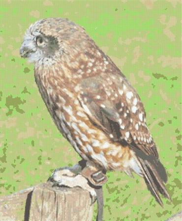 click here to view larger image of Little Owl (chart)
