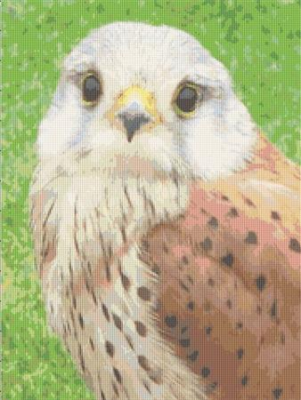 click here to view larger image of Male Kestrel (chart)