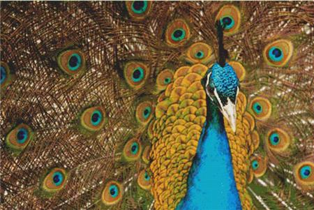 click here to view larger image of Beautiful Peacock (chart)