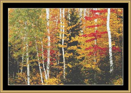 click here to view larger image of Birch Forest (chart)