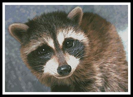 click here to view larger image of Cute Raccoon (chart)