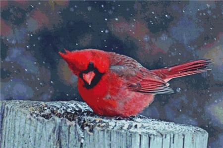 click here to view larger image of Cardinal in the Snow (chart)