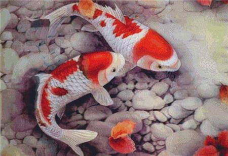 click here to view larger image of Koi Fish (chart)