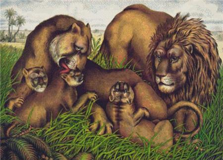 click here to view larger image of Lion Family (chart)