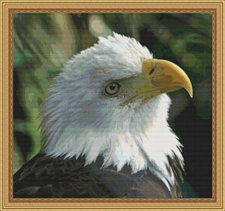 click here to view larger image of Bald Eagle (chart)
