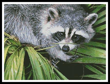 click here to view larger image of Raccoon (chart)