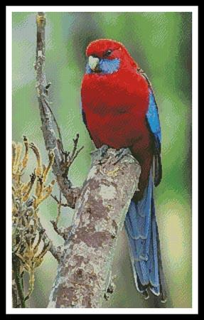 click here to view larger image of Crimson Rosella Photo (chart)