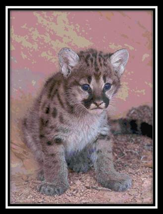 click here to view larger image of Mountain Lion Cub (chart)