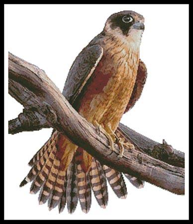 click here to view larger image of Australian Hobby (chart)