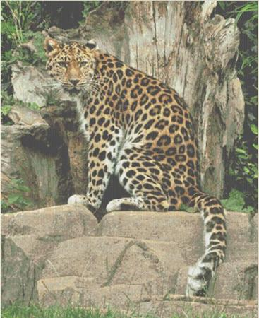 click here to view larger image of Leopard on Throne (chart)