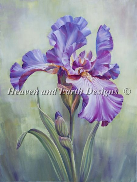 Mauve Iris - click here for more details about chart