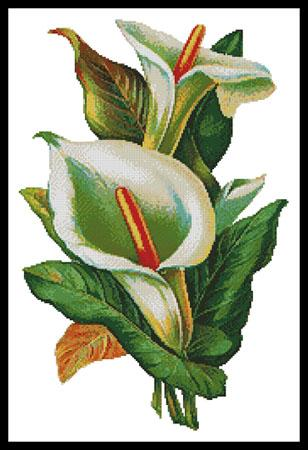 click here to view larger image of Calla Lilies 2 (chart)