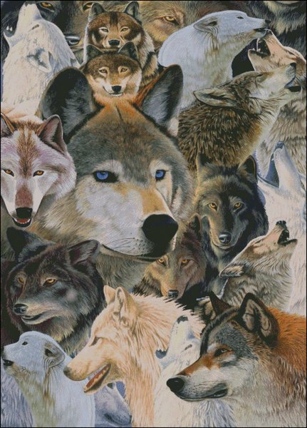 click here to view larger image of Wolves Alive (chart)