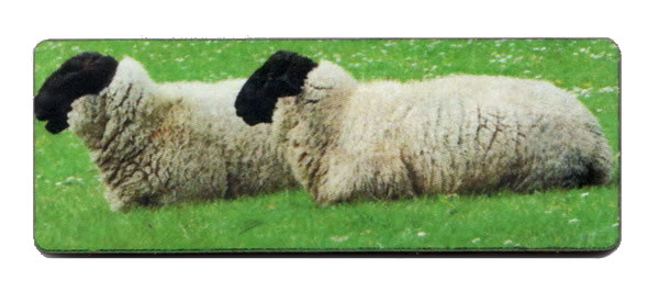 click here to view larger image of Black Sock Sheep Needle Minder (accessory)