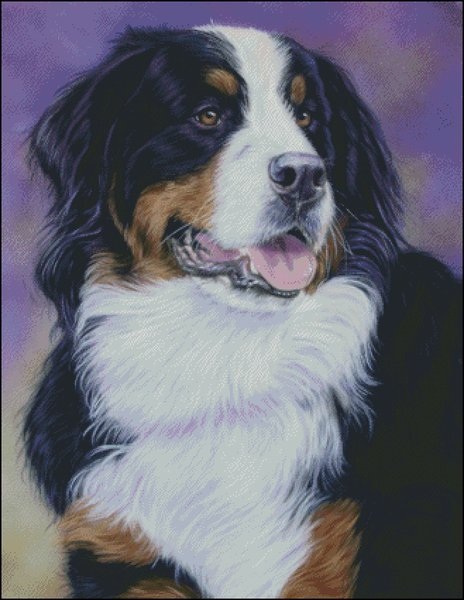click here to view larger image of Bernese Mountain Dog (chart)