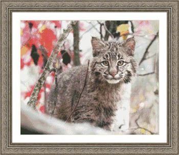click here to view larger image of Bobcat Mischief (chart)