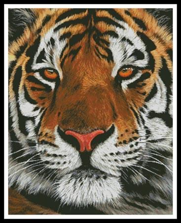 click here to view larger image of Bengal Tiger Portrait (chart)