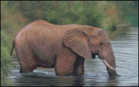 click here to view larger image of African Elephant in the Water (chart)
