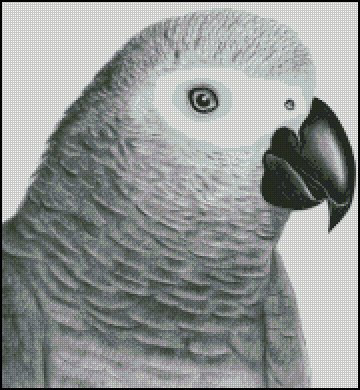 click here to view larger image of African Grey (chart)