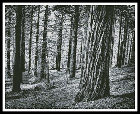 click here to view larger image of Black and White Forest (chart)