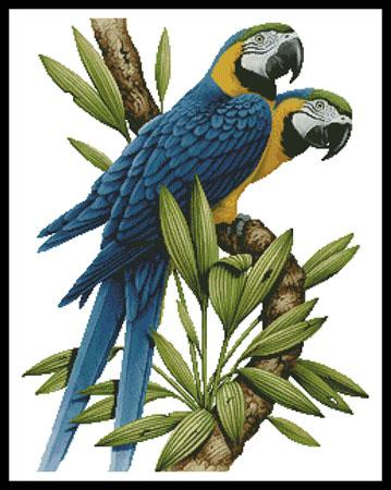 click here to view larger image of Majestic Macaws (chart)