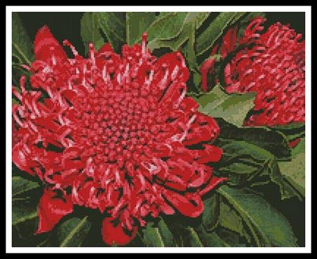 click here to view larger image of Waratah (chart)