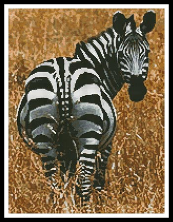 click here to view larger image of Zebra (chart)
