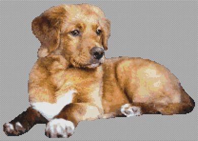 click here to view larger image of Adult Toller (chart)