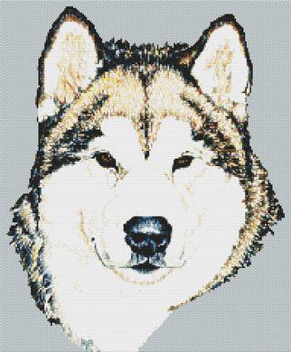 click here to view larger image of Alaskan Malamute (chart)