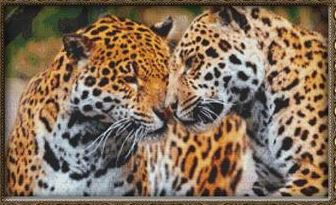 click here to view larger image of Cuddling Leopards (chart)