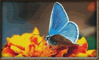 click here to view larger image of Blue Butterfly on Orange (chart)