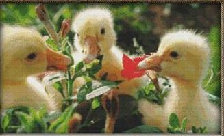 click here to view larger image of Cute Ducklings (chart)