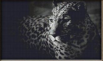 click here to view larger image of Grey Leopard (chart)