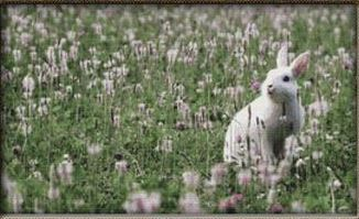 click here to view larger image of Bunny Flower Field (chart)