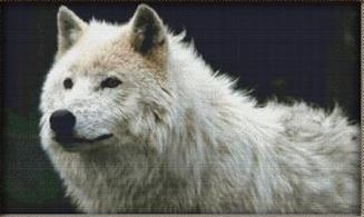 click here to view larger image of Husky White Wolf (chart)