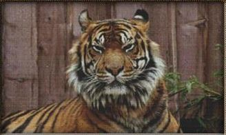 click here to view larger image of Grinning Tiger (chart)