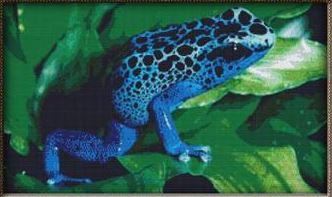 click here to view larger image of Blue Tree Frog (chart)