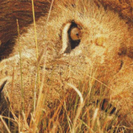 click here to view larger image of Lion Close-Up (chart)