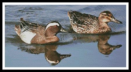 click here to view larger image of Garganey Ducks (chart)