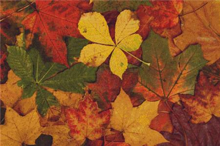 click here to view larger image of Colorful Autumn Leaves (chart)