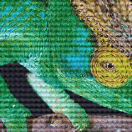 click here to view larger image of Crazy Chameleon (chart)