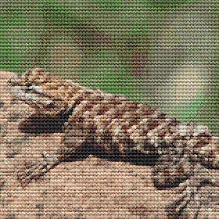 click here to view larger image of Camouflaged Lizard (chart)